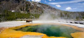 Discover The Otherworldly Beauty Of Yellowstone National Park